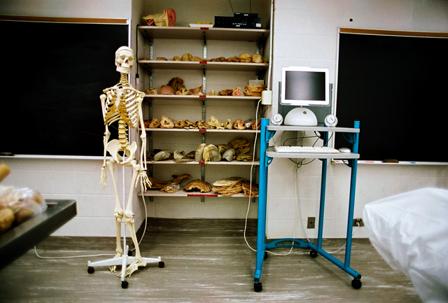 Peter Lang Skeleton In Classroom